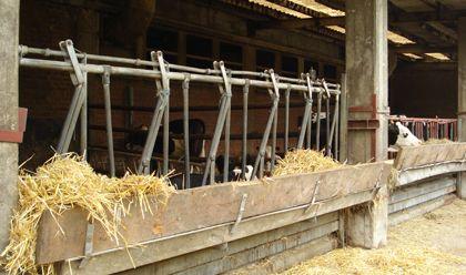 Milchviehhaltung in einem Boxenlaufstall